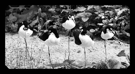 One Legged Birds