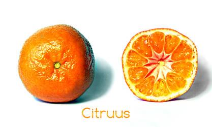 Citruus