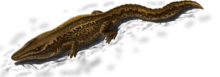 Cochleosaurus bohemicus by Plioart