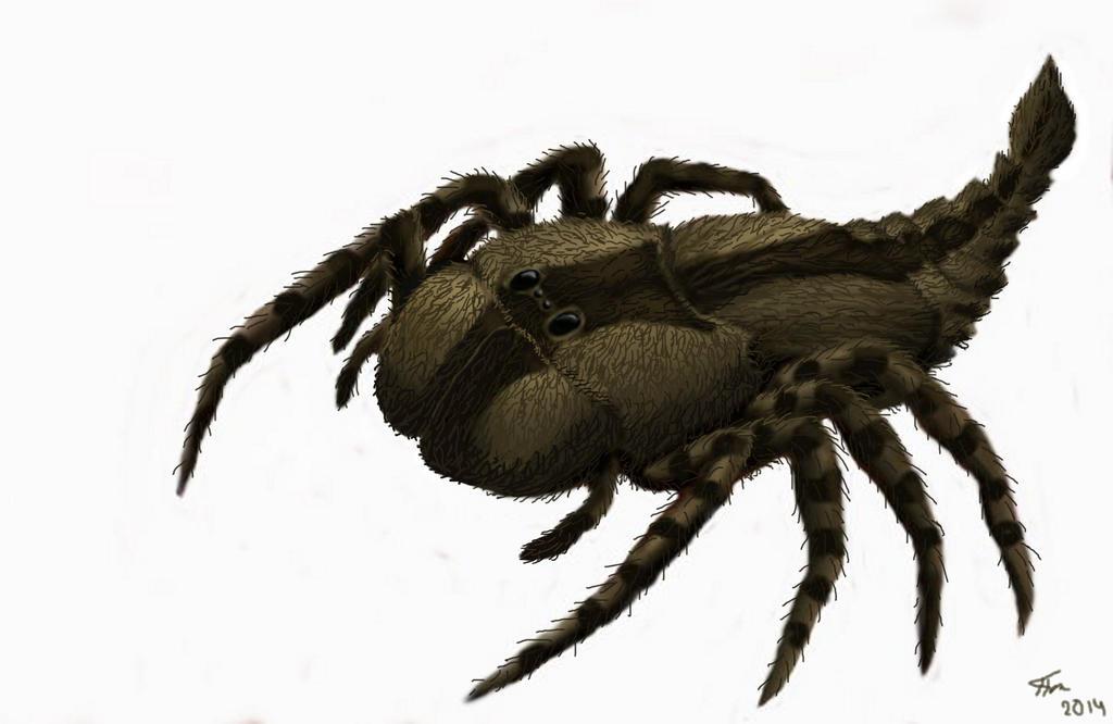 Spider Megarachne sarboniferous Period. by Plioart on ...