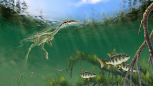 Megapnosaurus kayentakatae