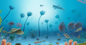 A garden of sea lilies.