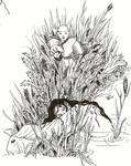 YtT Shintaru in the reeds