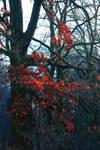 StockHeaven ~ Nature 4 by MiriStock