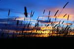 timothy sunset