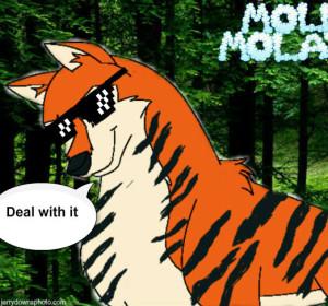 mollymolata's Profile Picture