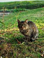 Cat by Zsurzsi