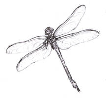 dragonfly by freakstatic