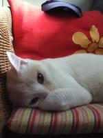 Im sleepy...