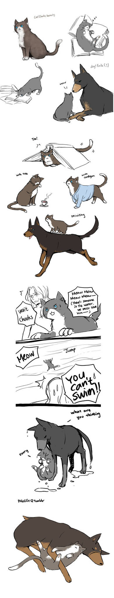 XMFC: catCharles and dogErik