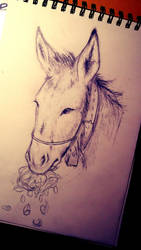 Donkey SKETCH by sqoodio