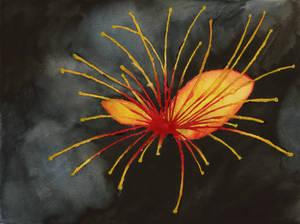 Sea Poison Tree Flower