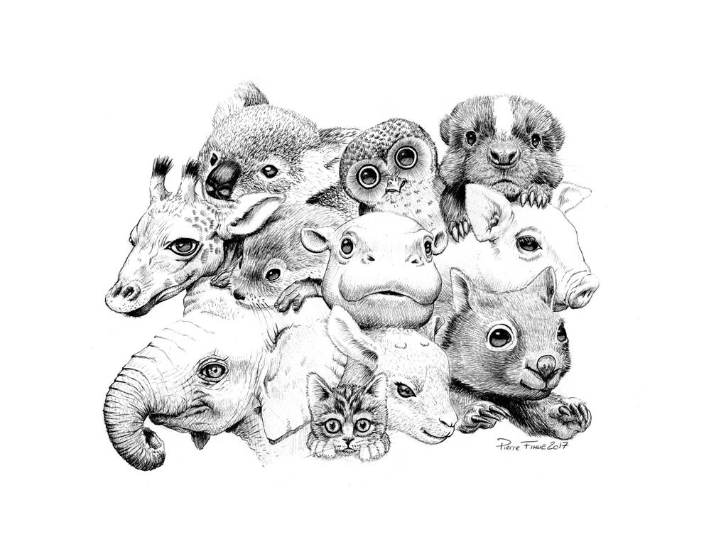 Baby Animals by PierreFihue on DeviantArt