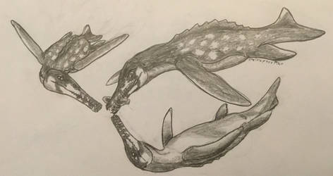 Sophosaurus delphinoides having fun