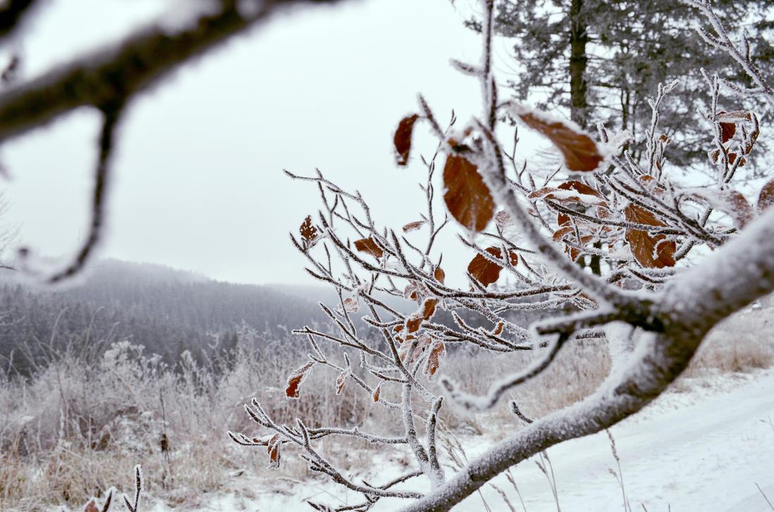 frost fangs by KugelKatzenFisch