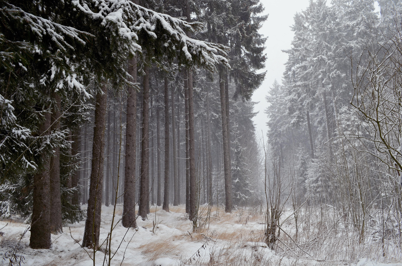 it's my december by KugelKatzenFisch