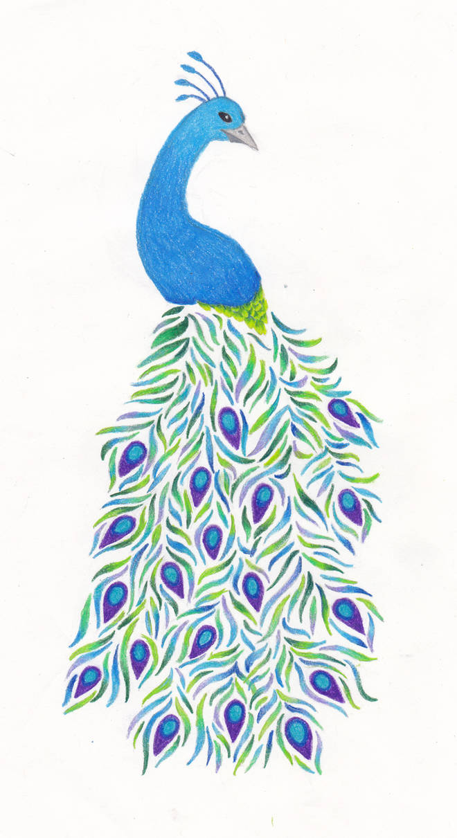Peacock Drawing by FloraLaurel on DeviantArt