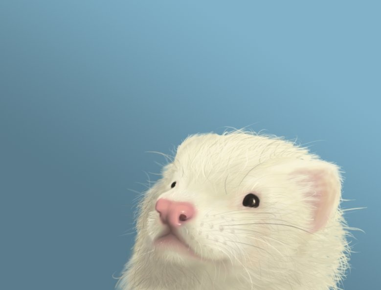 ferret face wallpaper background - photo #36