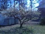 Spring by EmanuelJones