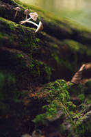 Magical Forest 4 (Backround Stock) by Swicago