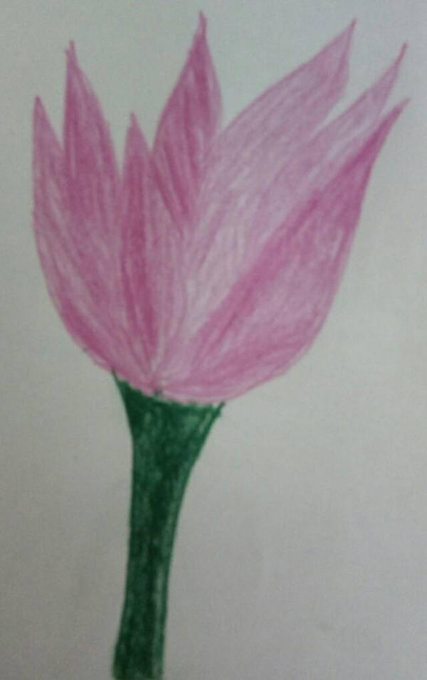 Pencil drawing of pink flower by rohitsapra on deviantart pencil drawing of pink flower by rohitsapra mightylinksfo