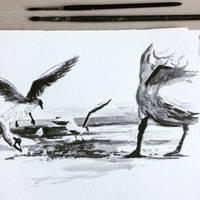 Inktober #11 Beachbirds