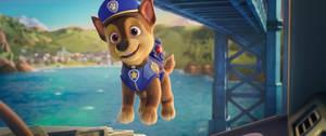 Actually sir, I'm a puppy!