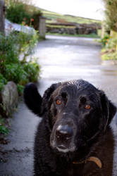 Wet dog in driveway by lurker-