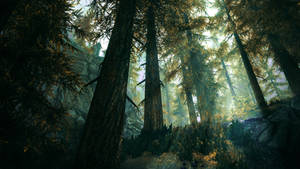 Deep in The Woods - Skyrim by WatchTheSkiies