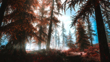 Deep in The Woods II - Skyrim