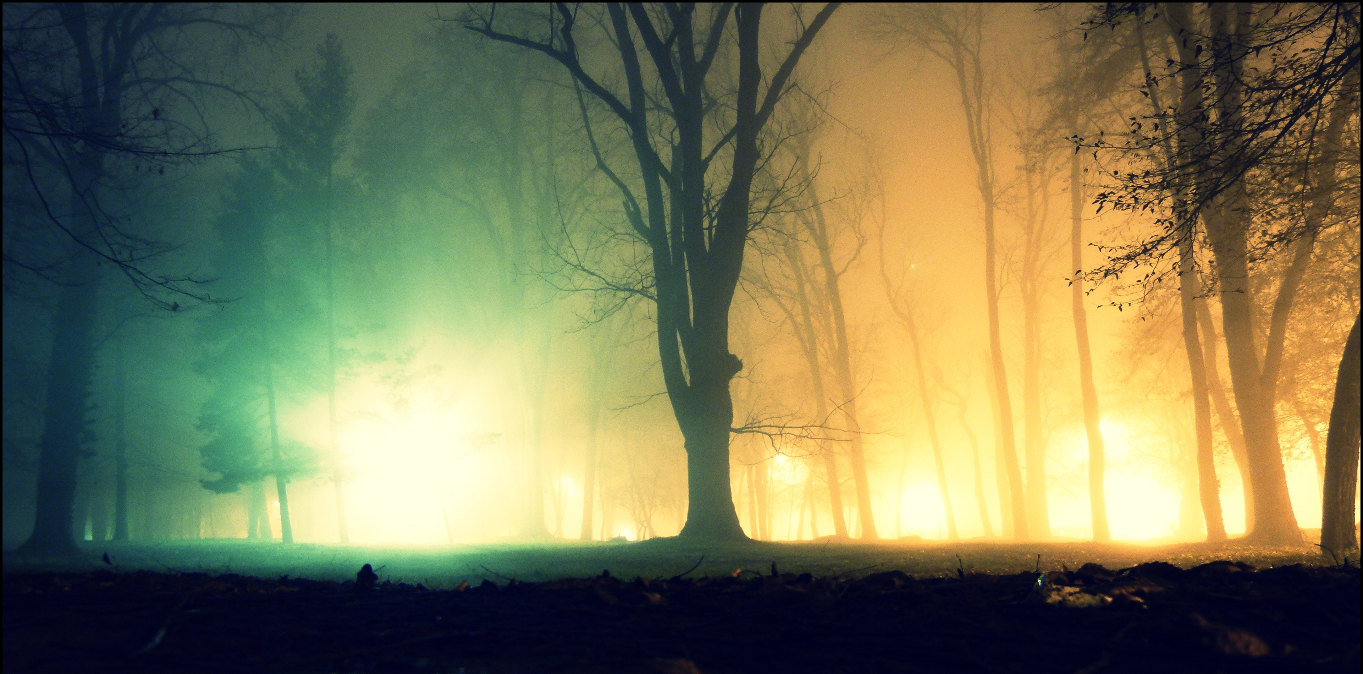 Fog In The Park - Shot In Color # by Renato9