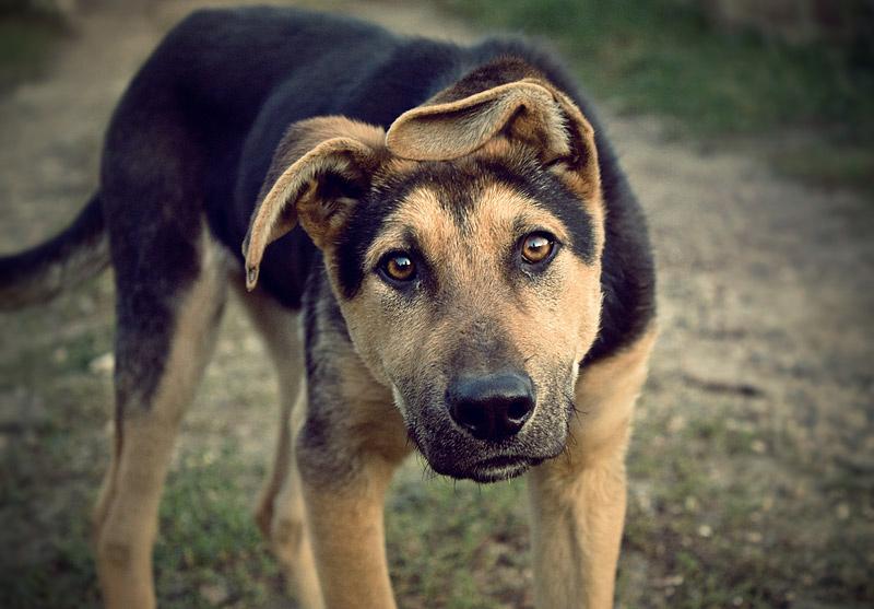 Dog by Vurtov