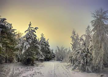 magic forgotten forest by Vurtov