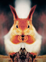 squirrel-killer by Vurtov