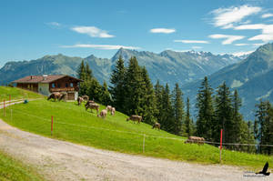 Alpen by Man90Ray