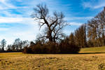 Tree in the middel by Man90Ray