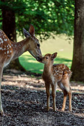 motherly love by Man90Ray