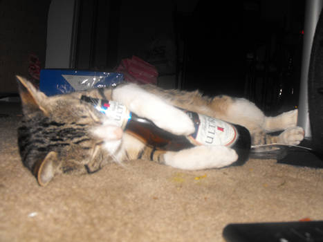 bad kitty Say no to ALCOHOL