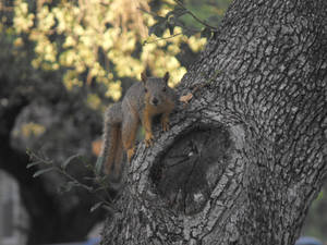 Fleeting Squirrel