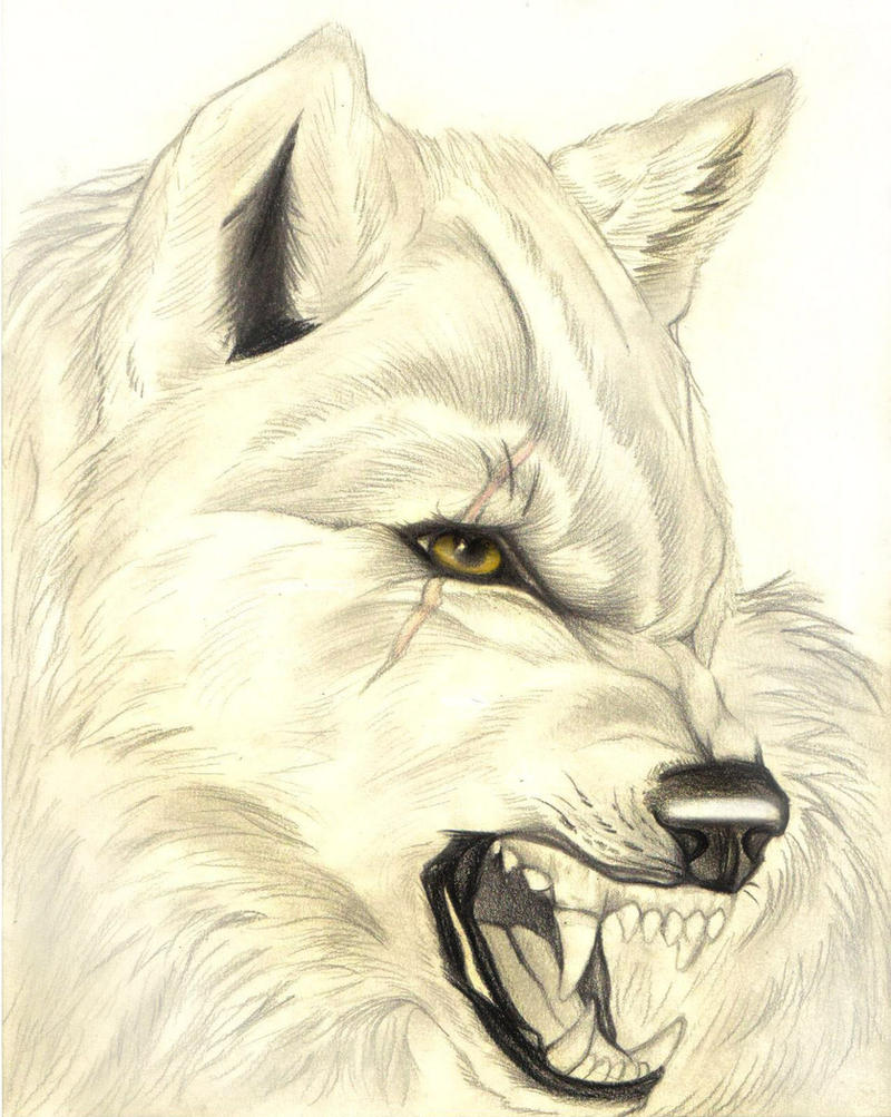 Realistic Wolf Drawing Howling