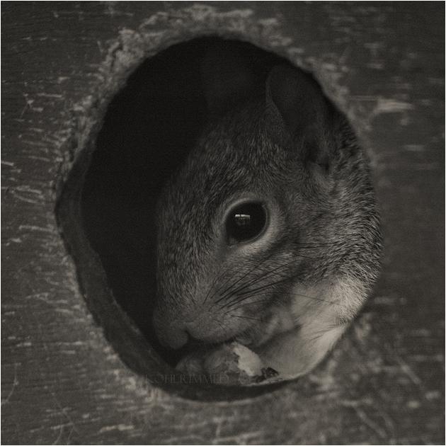 peek-a-boo. by RowennaCox