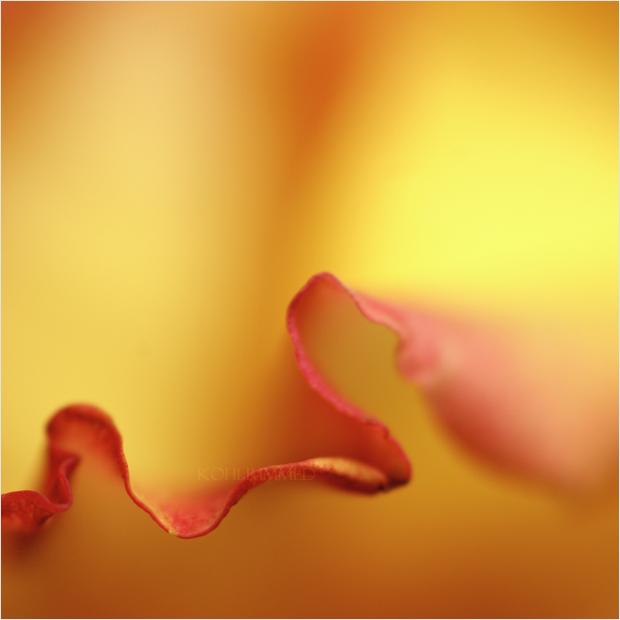 version curl. by RowennaCox