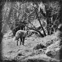 walk with me. by RowennaCox