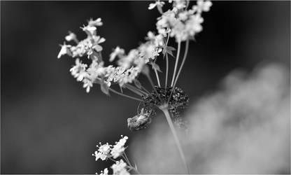 Dark Hemlock by RowennaCox