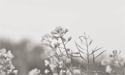 Light Hemlock by RowennaCox