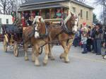 Belgian Horse Stock 001