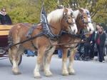 Belgian Horse Stock 006