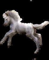 White Foal Precut by peachesrox-stock