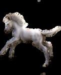 White Foal Precut