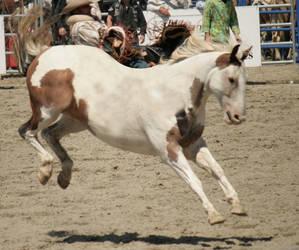 Paint Horse Buck 001 by peachesrox-stock